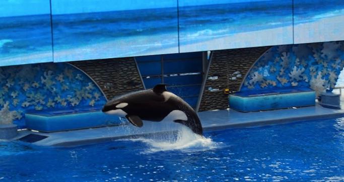 orca sea world