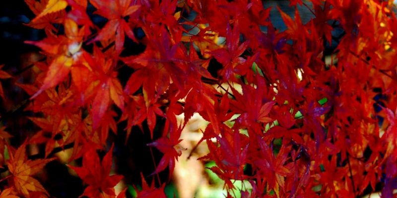 postparto en otoño