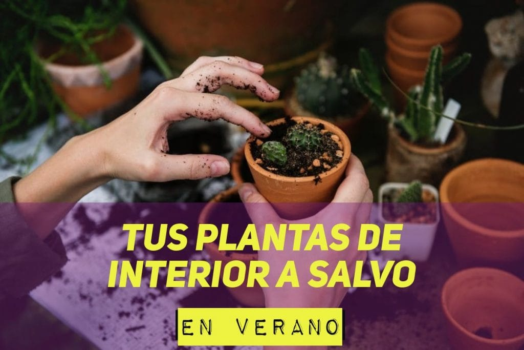 riego automatico para plantas de interior